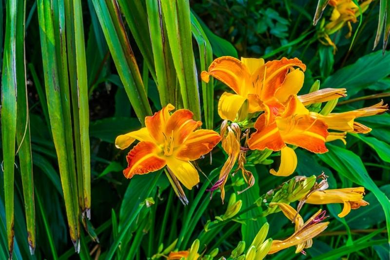 Border planten paars